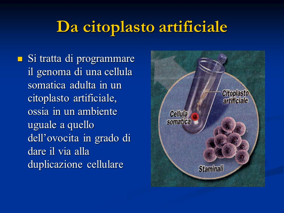 Da citoplasto artificiale