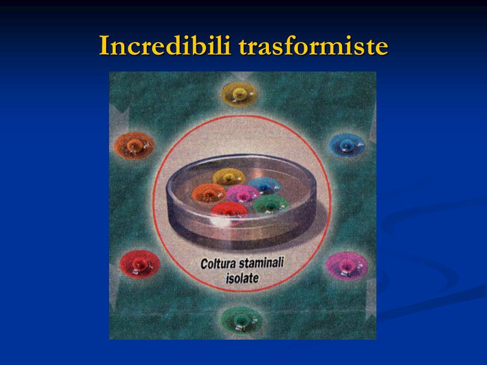 Incredibili trasformiste