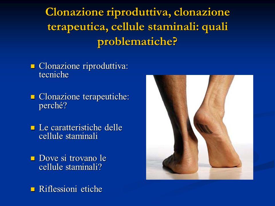Clonazione riproduttiva, clonazione terapeutica, cellule staminali: quali problematiche