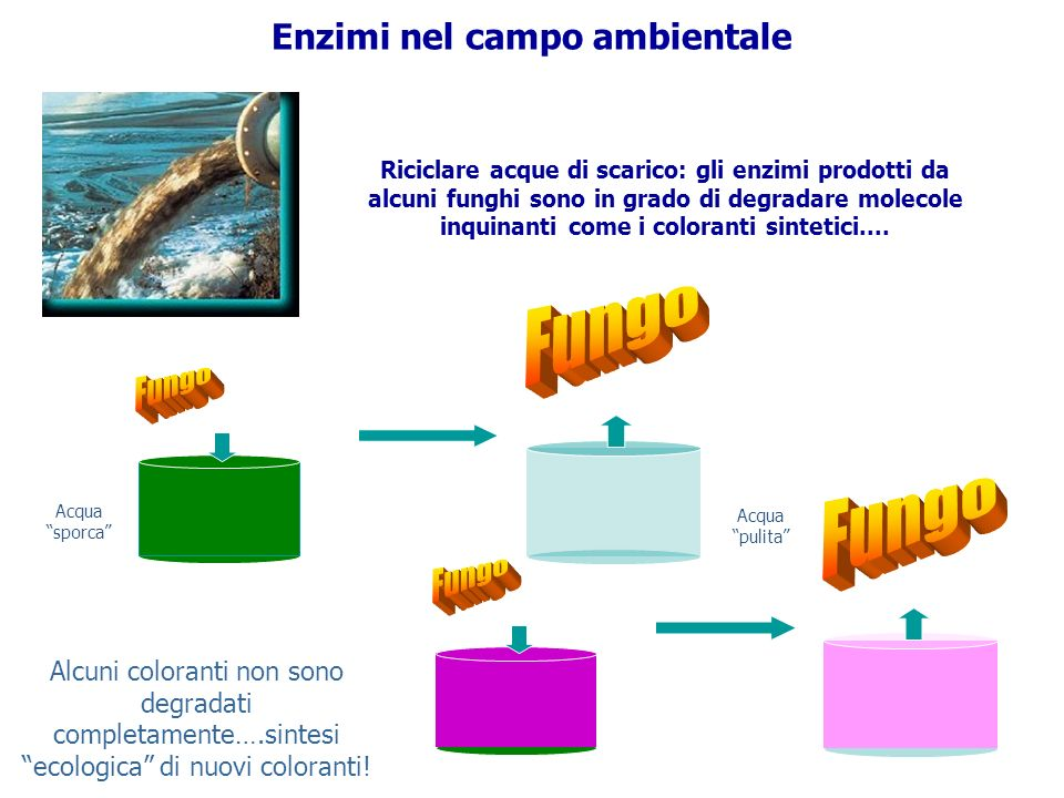 Enzimi nel campo ambientale