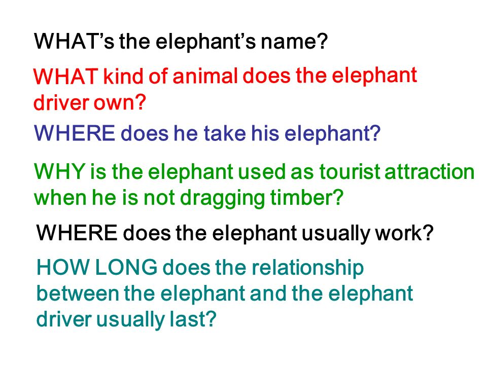WHAT's the elephant's name