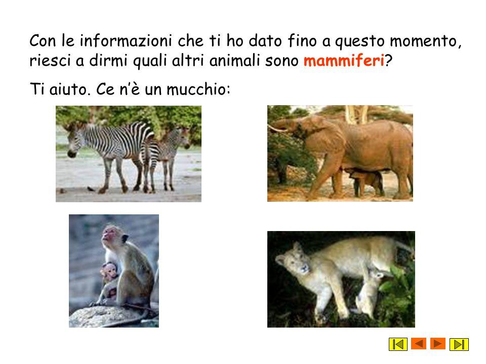 Con le informazioni che ti ho dato fino a questo momento, riesci a dirmi quali altri animali sono mammiferi