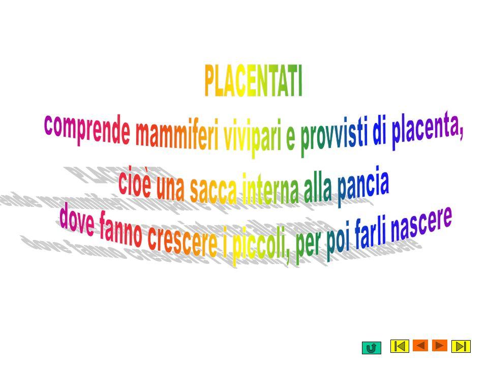 comprende mammiferi vivipari e provvisti di placenta,