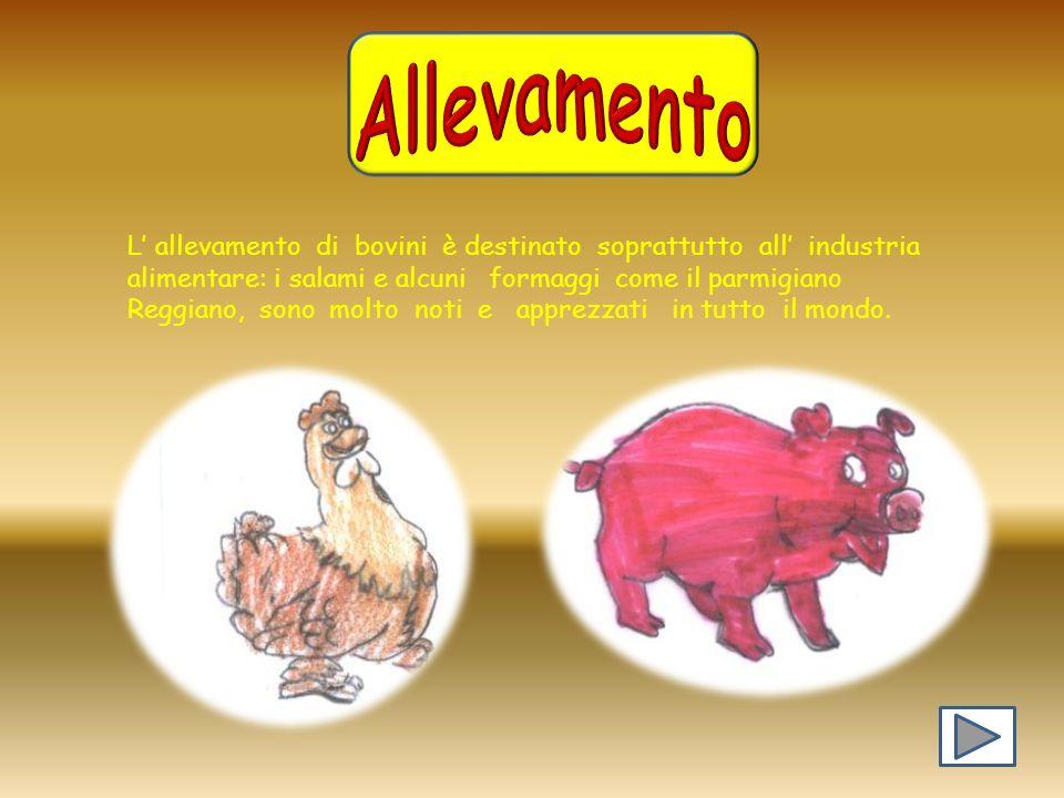 Allevamento L' allevamento di bovini è destinato soprattutto all' industria. alimentare: i salami e alcuni formaggi come il parmigiano.