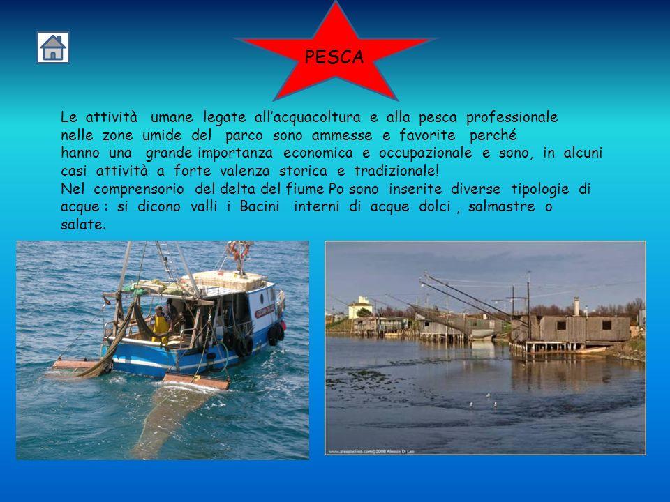 PESCA Le attività umane legate all'acquacoltura e alla pesca professionale.