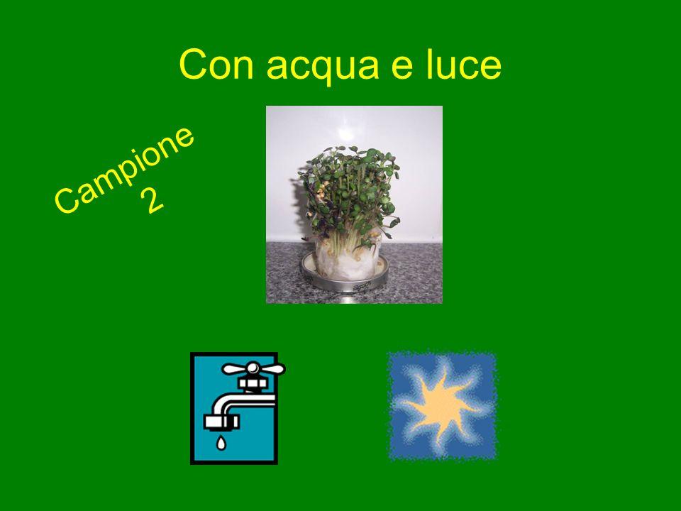 Con acqua e luce Campione 2