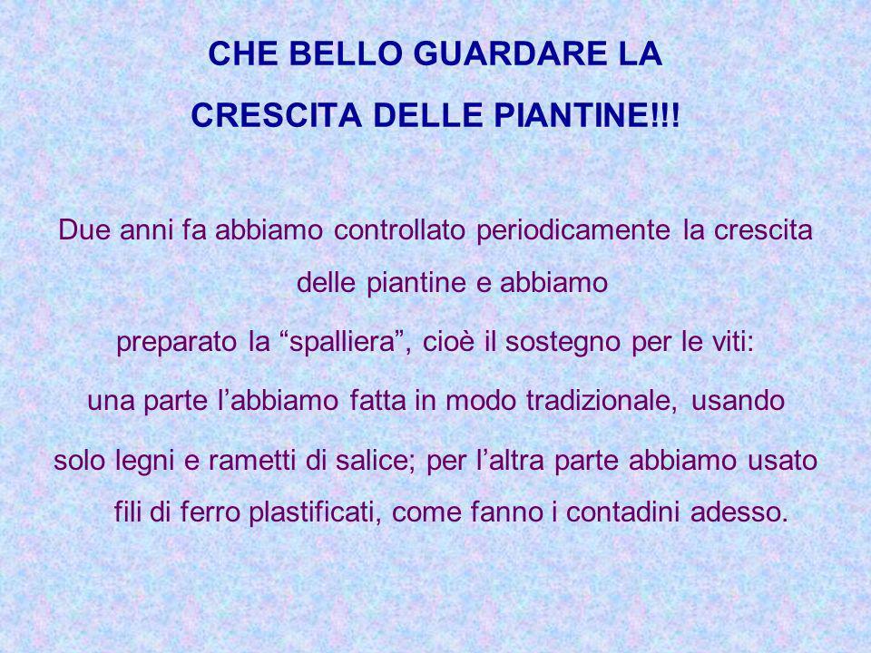 CHE BELLO GUARDARE LA CRESCITA DELLE PIANTINE!!!
