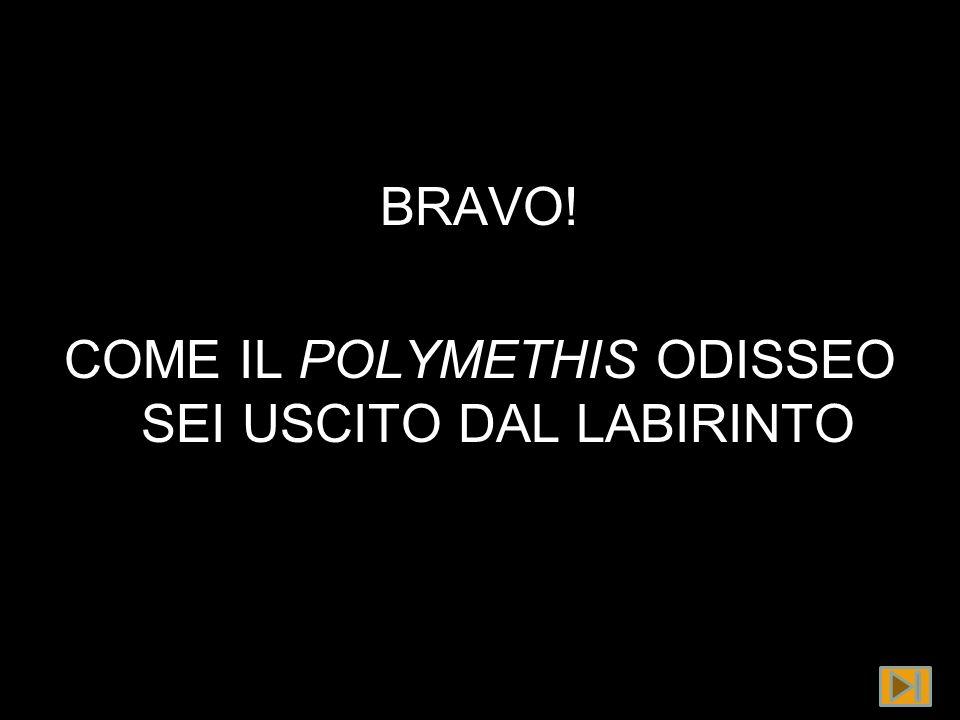 BRAVO! COME IL POLYMETHIS ODISSEO SEI USCITO DAL LABIRINTO