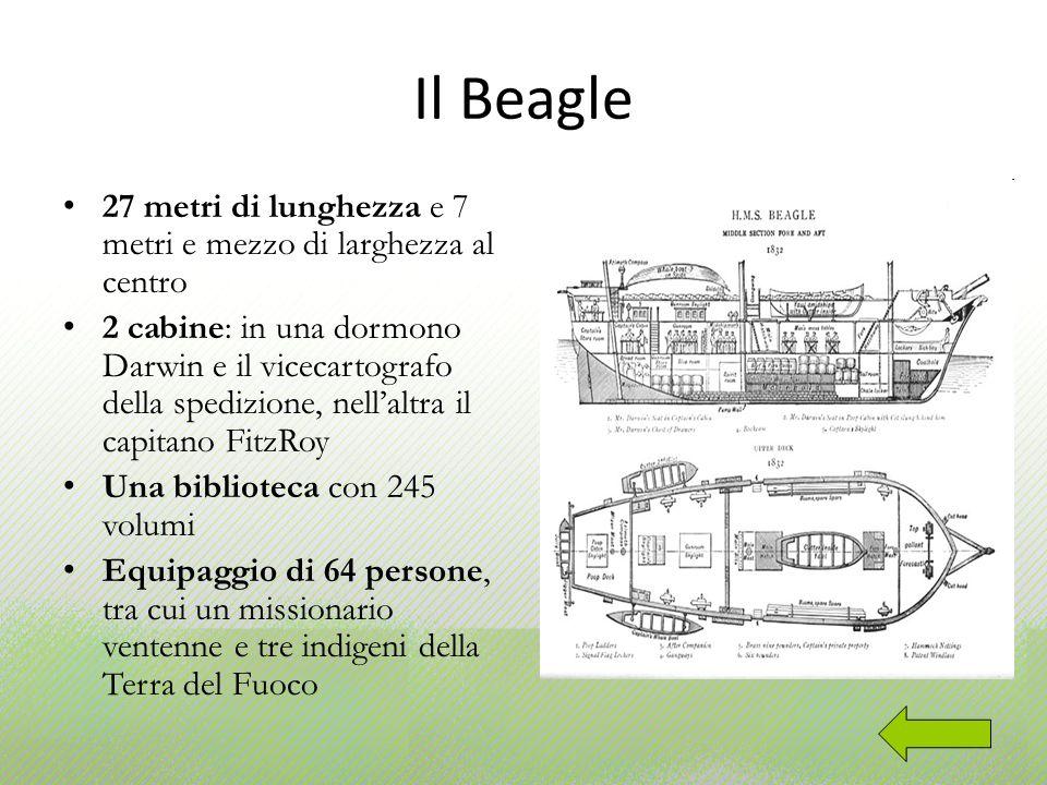 Il Beagle 27 metri di lunghezza e 7 metri e mezzo di larghezza al centro.