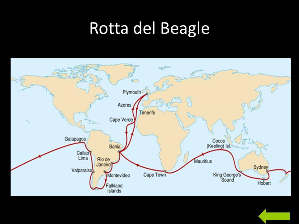 Rotta del Beagle