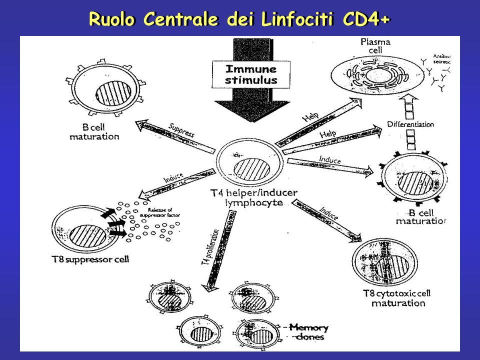 Ruolo Centrale dei Linfociti CD4+
