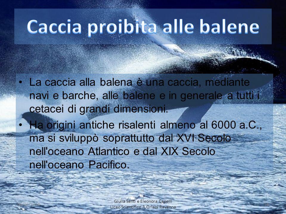 Caccia proibita alle balene