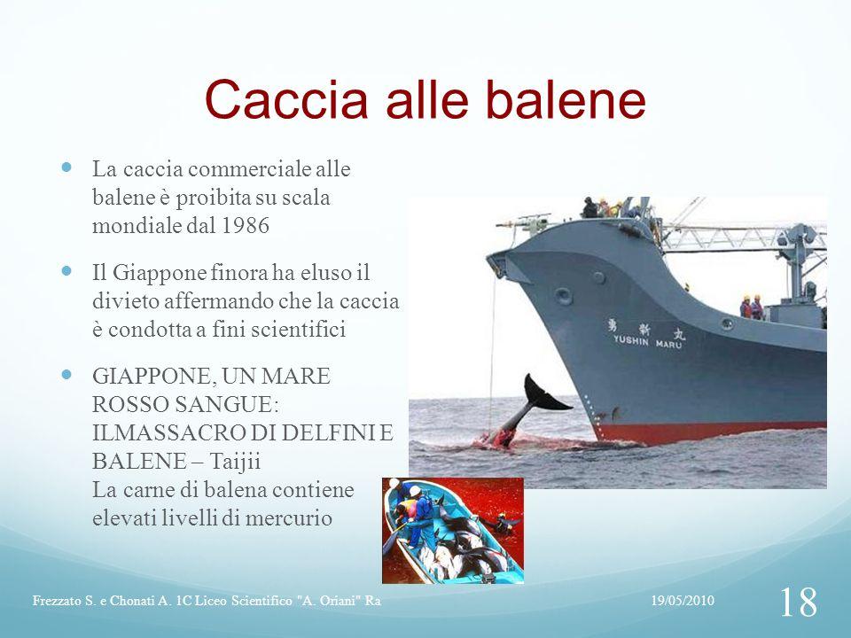 Caccia alle balene La caccia commerciale alle balene è proibita su scala mondiale dal 1986.