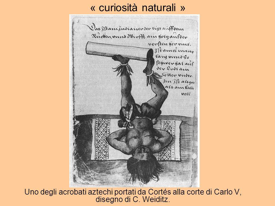 « curiosità naturali » Colombo indiani=oggetti; Cortes i.=soggetti ridotti al ruolo di produttori di oggetti.