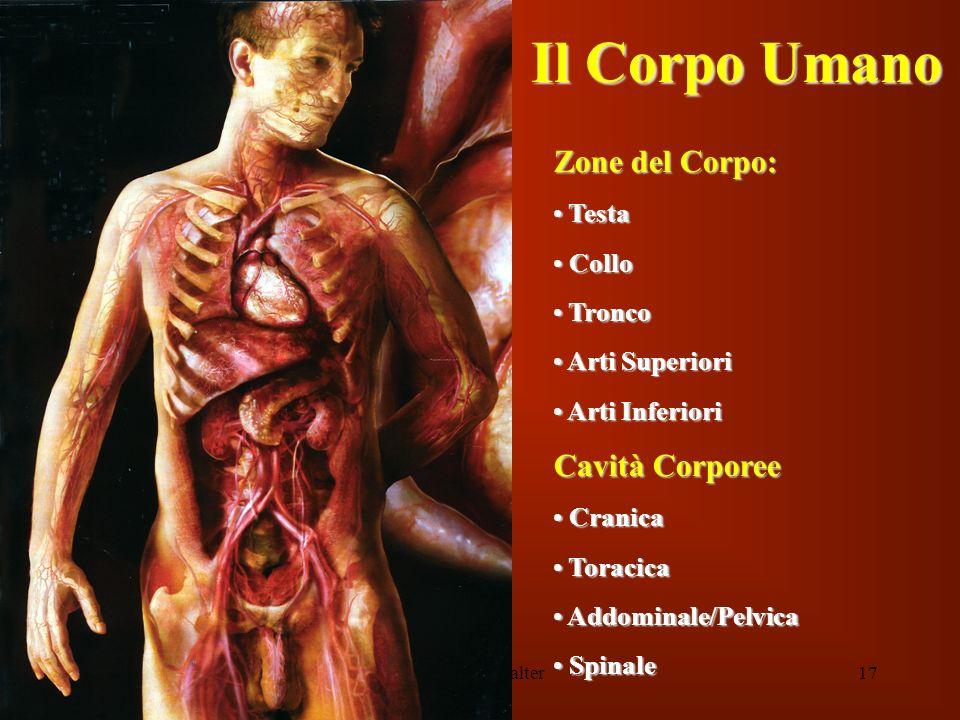 Il Corpo Umano Zone del Corpo: Cavità Corporee Testa Collo Tronco