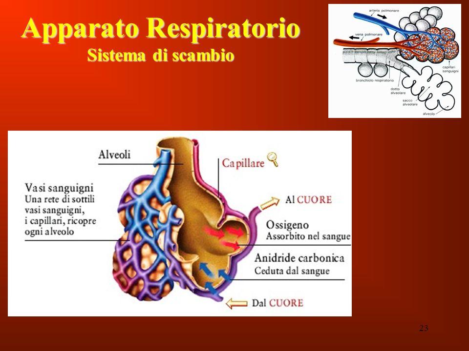 Apparato Respiratorio Sistema di scambio