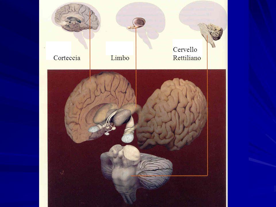 Cervello Rettiliano Corteccia Limbo