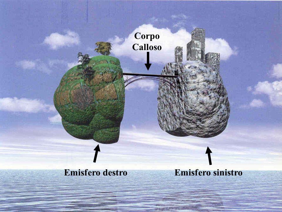 Corpo Calloso Emisfero destro Emisfero sinistro