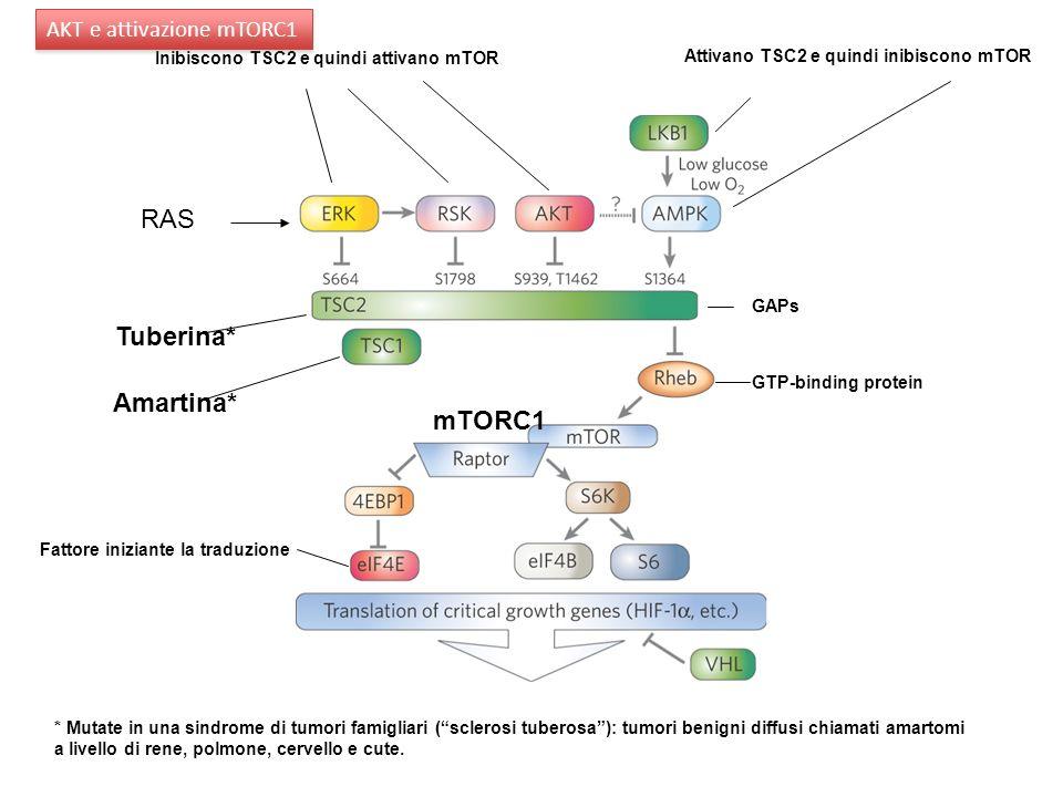 RAS Tuberina* Amartina* mTORC1 AKT e attivazione mTORC1