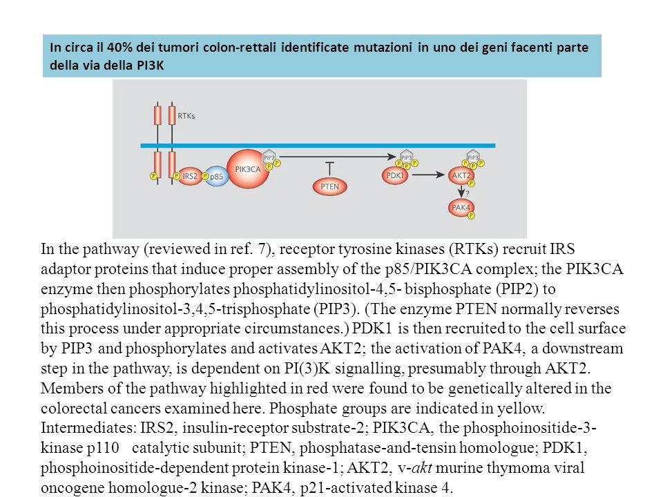 In circa il 40% dei tumori colon-rettali identificate mutazioni in uno dei geni facenti parte