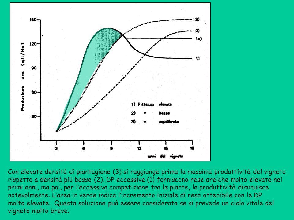 Con elevate densità di piantagione (3) si raggiunge prima la massima produttività del vigneto rispetto a densità più basse (2).