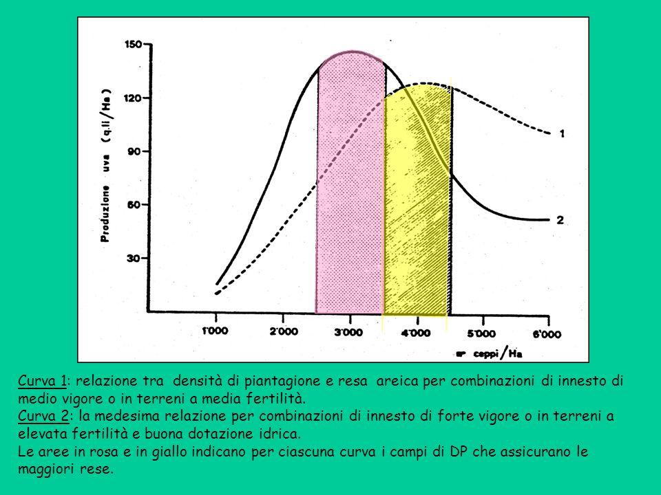 Curva 1: relazione tra densità di piantagione e resa areica per combinazioni di innesto di medio vigore o in terreni a media fertilità.