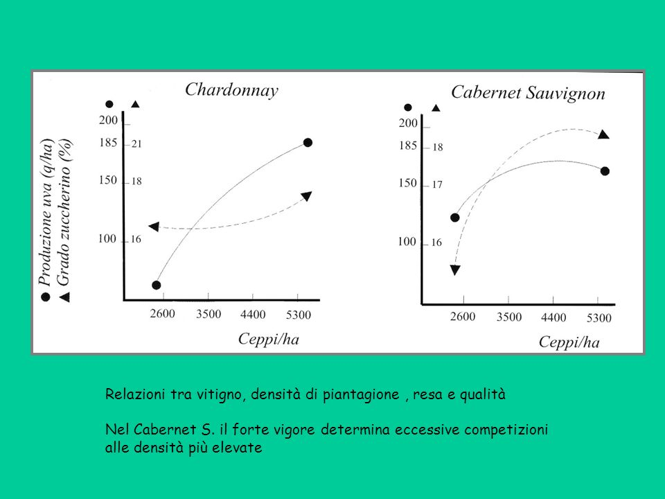 Relazioni tra vitigno, densità di piantagione , resa e qualità