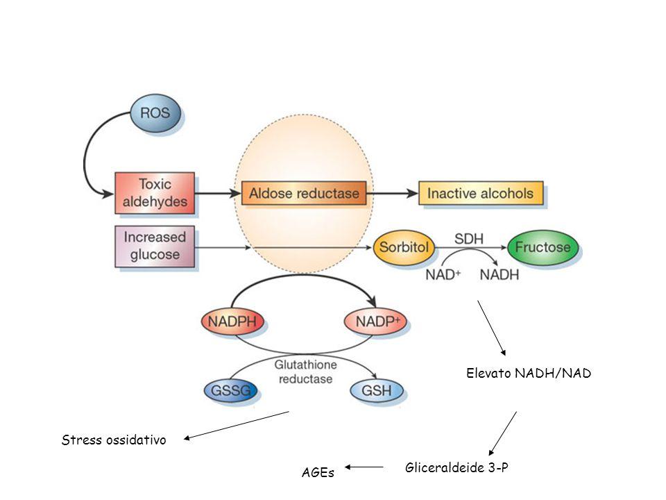 Elevato NADH/NAD Stress ossidativo Gliceraldeide 3-P AGEs