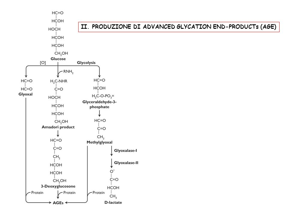 II. PRODUZIONE DI ADVANCED GLYCATION END-PRODUCTs (AGE)