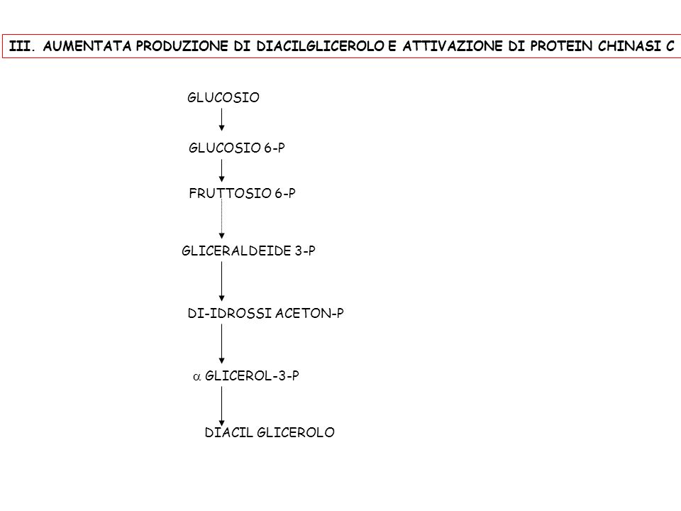III. AUMENTATA PRODUZIONE DI DIACILGLICEROLO E ATTIVAZIONE DI PROTEIN CHINASI C