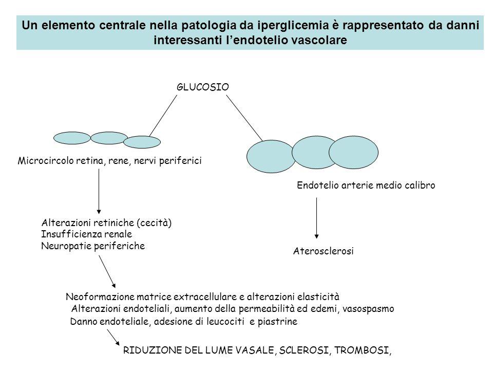 interessanti l'endotelio vascolare
