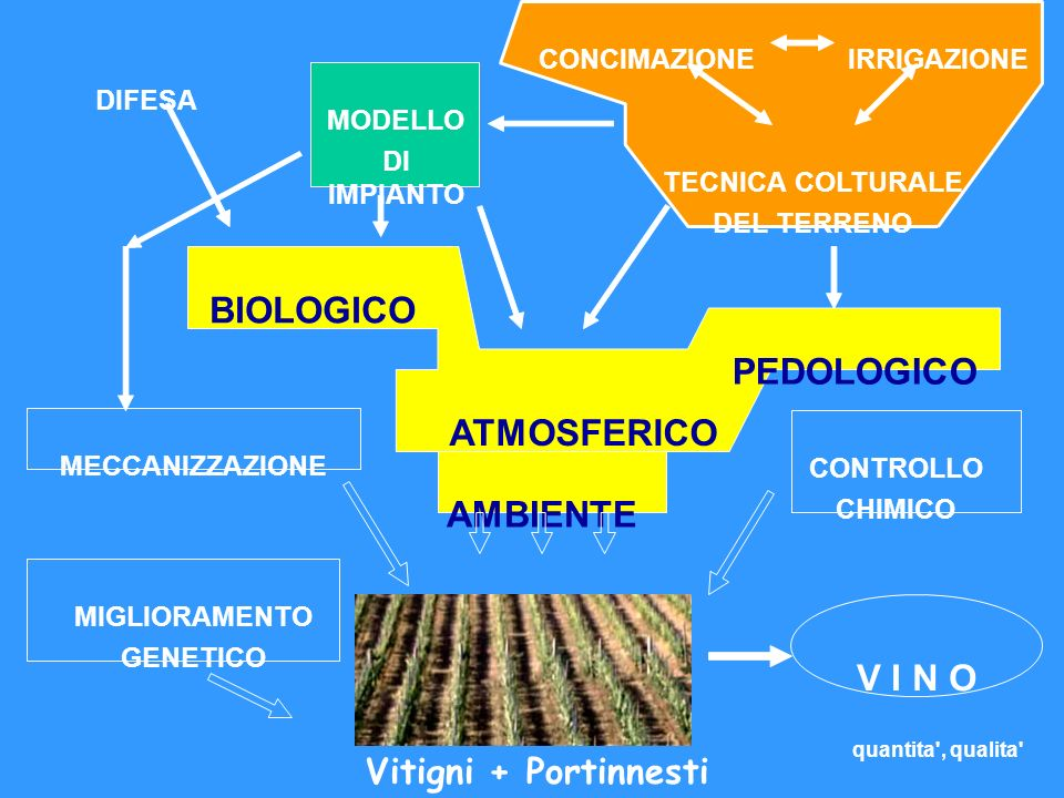 AMBIENTE BIOLOGICO ATMOSFERICO PEDOLOGICO V I N O