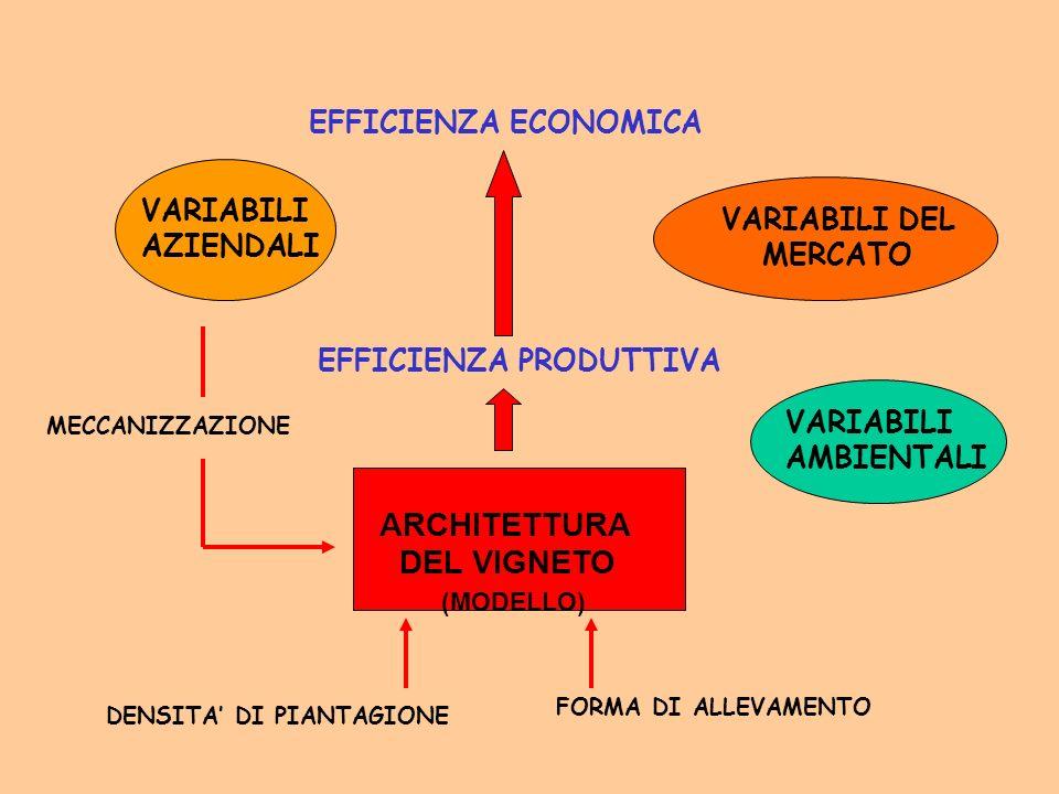 ARCHITETTURA DEL VIGNETO EFFICIENZA ECONOMICA VARIABILI VARIABILI DEL