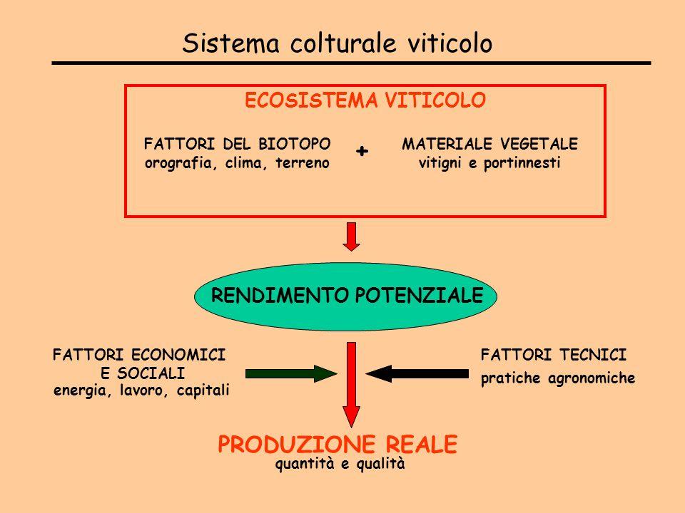Sistema colturale viticolo
