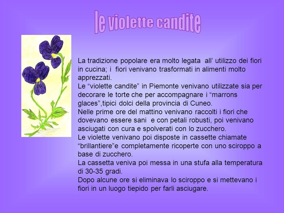 le violette candite