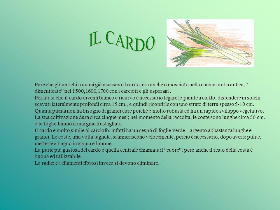 IL CARDO