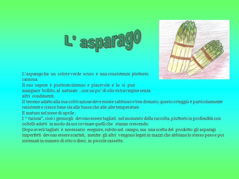 L asparago L'asparago ha un colore verde scuro e una consistenza piuttosto. carnosa.