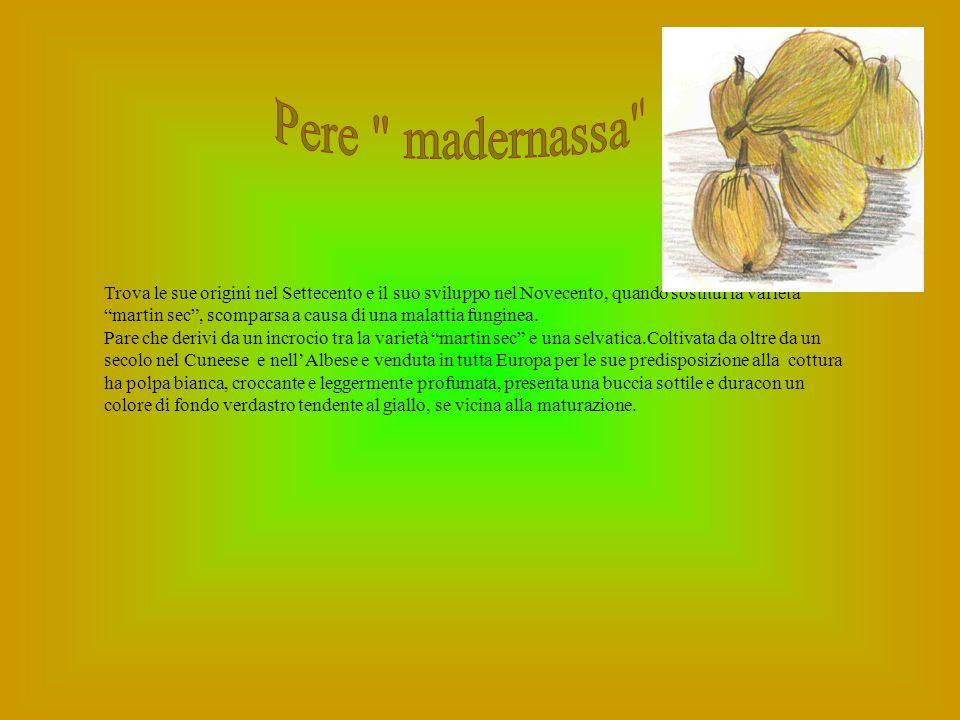 Pere madernassa