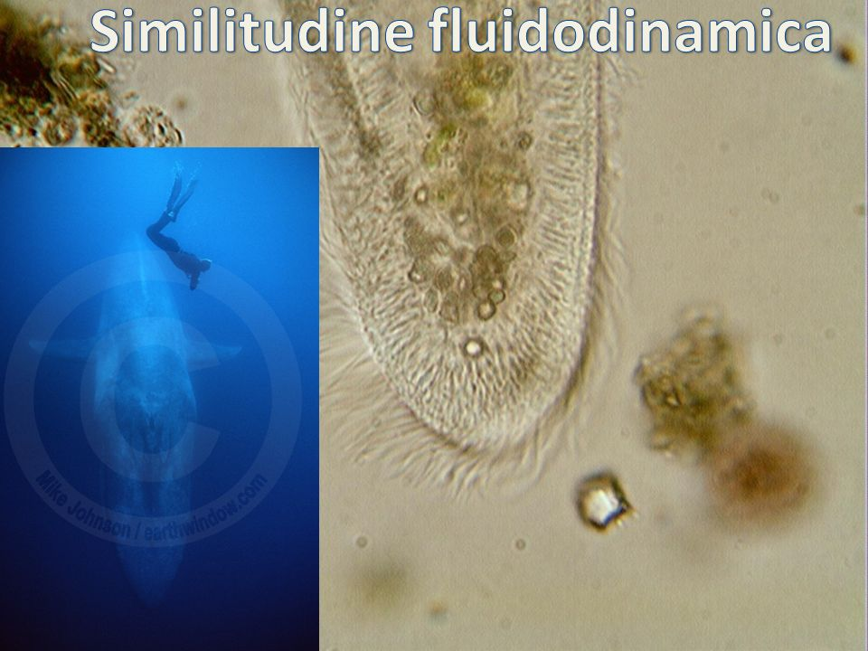 Similitudine fluidodinamica
