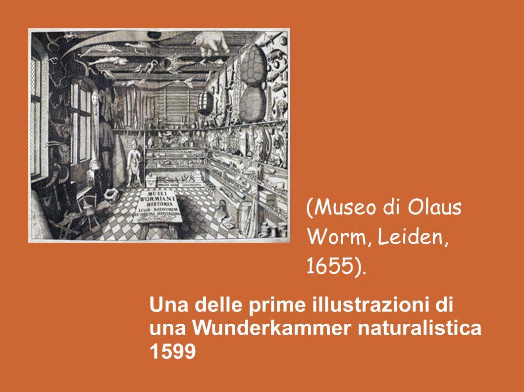 Una delle prime illustrazioni di una Wunderkammer naturalistica 1599
