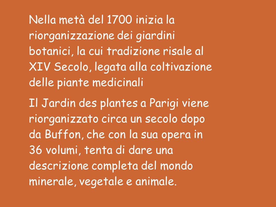 Nella metà del 1700 inizia la riorganizzazione dei giardini botanici, la cui tradizione risale al XIV Secolo, legata alla coltivazione delle piante medicinali