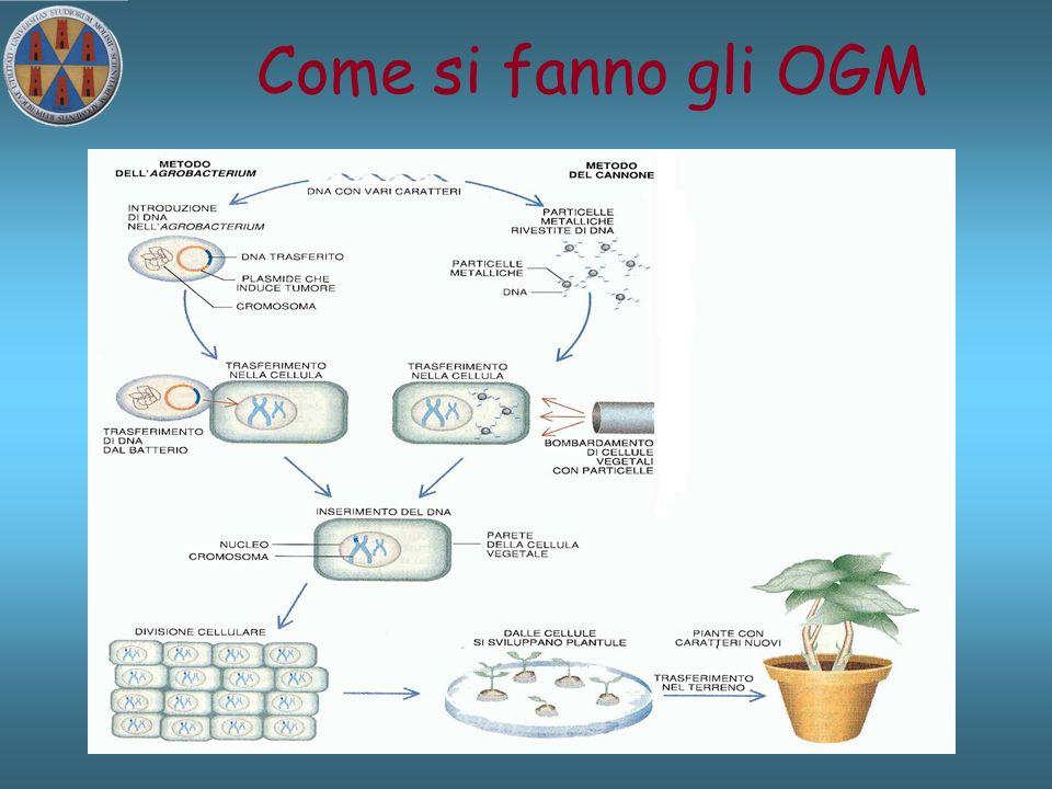 Come si fanno gli OGM