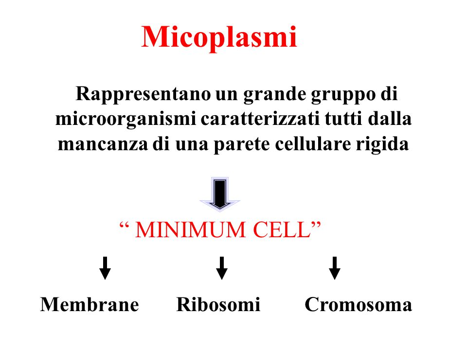 Micoplasmi MINIMUM CELL