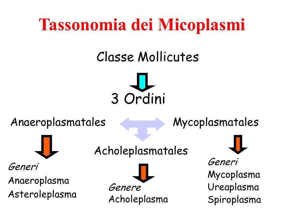 Tassonomia dei Micoplasmi