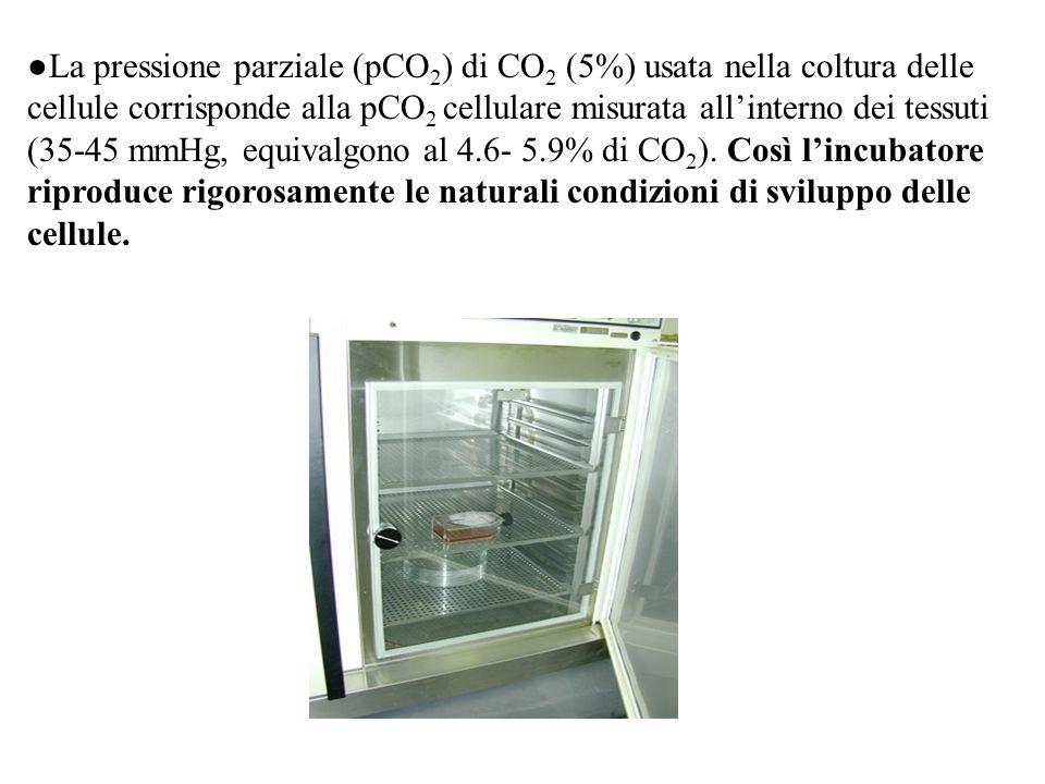 ●La pressione parziale (pCO2) di CO2 (5%) usata nella coltura delle cellule corrisponde alla pCO2 cellulare misurata all'interno dei tessuti (35-45 mmHg, equivalgono al 4.6- 5.9% di CO2).