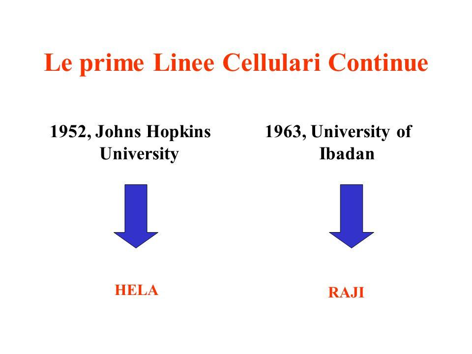 Le prime Linee Cellulari Continue