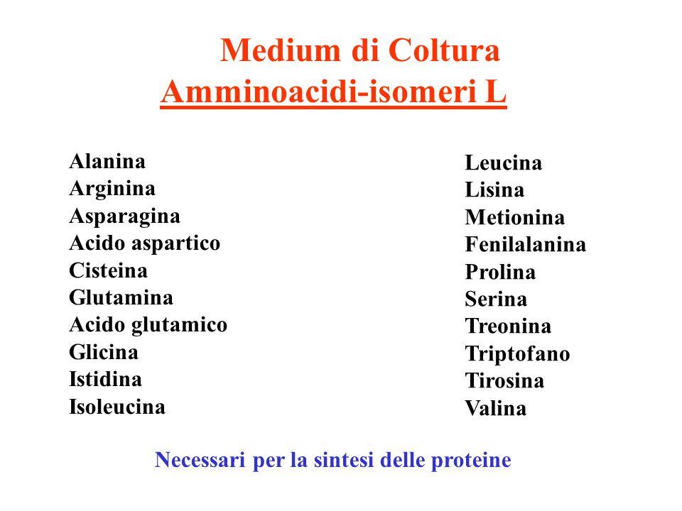 Amminoacidi-isomeri L