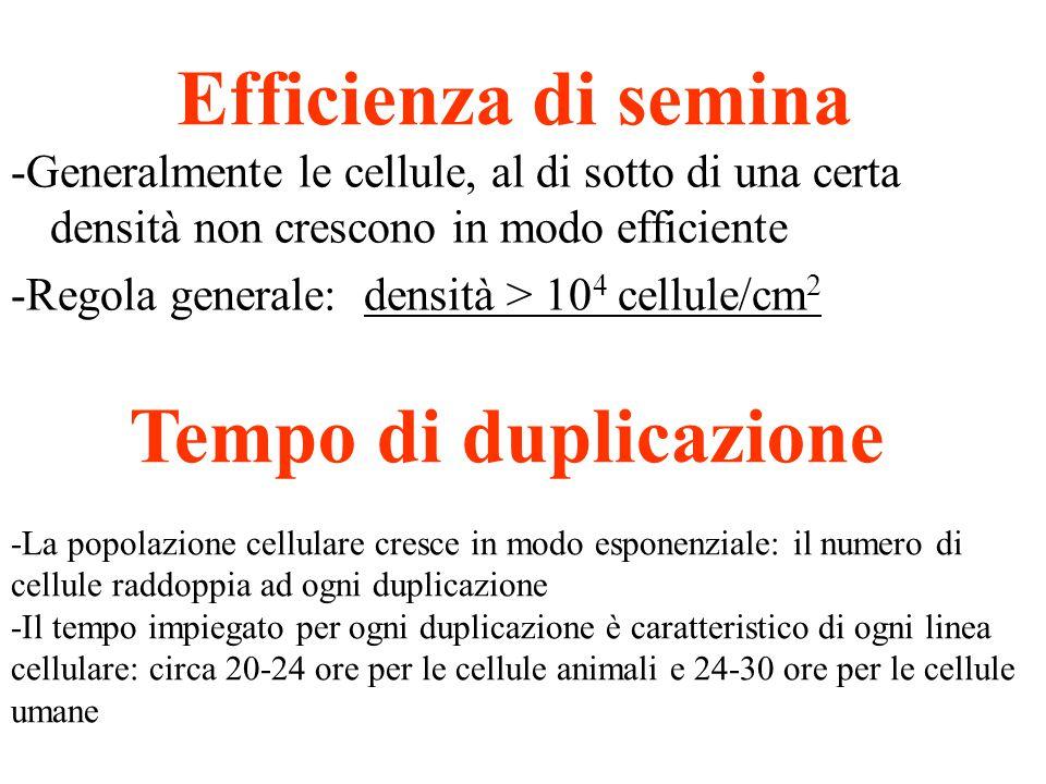 Efficienza di semina Tempo di duplicazione