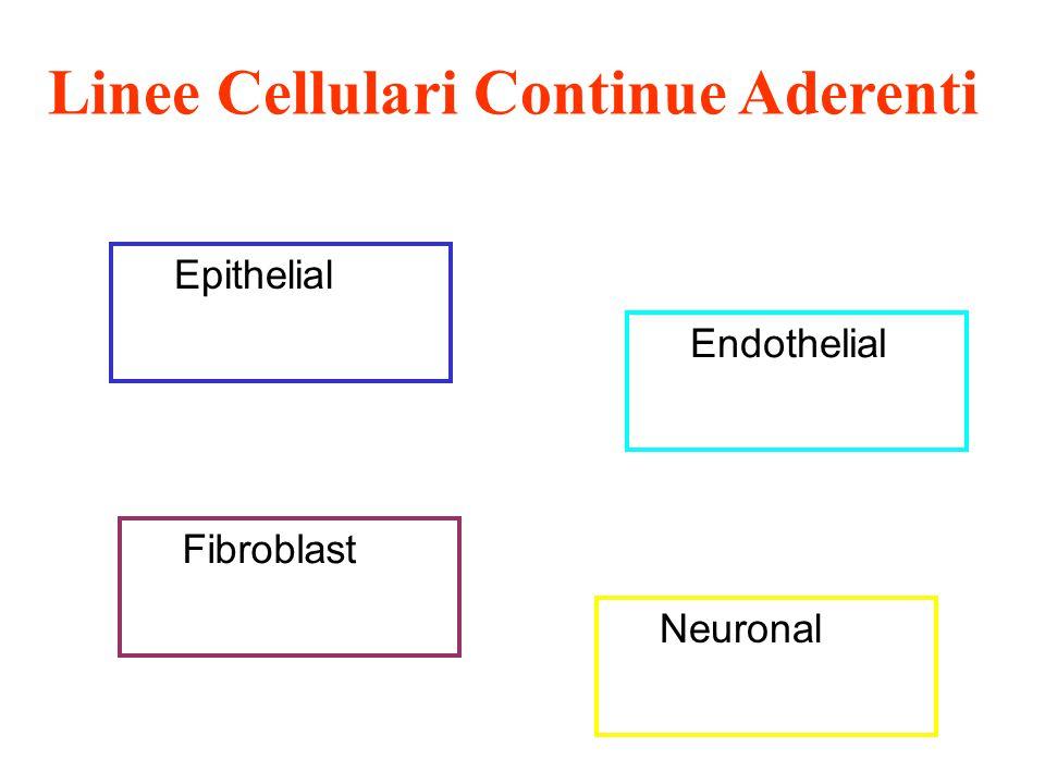 Linee Cellulari Continue Aderenti