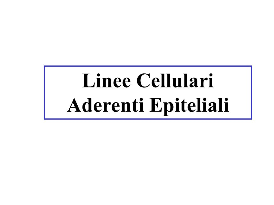 Linee Cellulari Aderenti Epiteliali